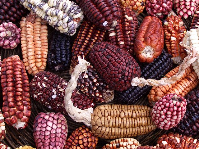 purple corn for peruvian beer