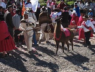 Llama Peru