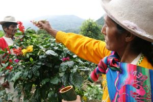 The Best of Peru Includes it's Homegrown Coffee