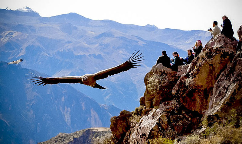 peru guided tours in colca canyon with condor flight in peru tours